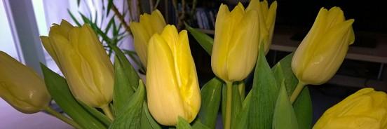 Jahresendgedanken 2014 mit Tulpen
