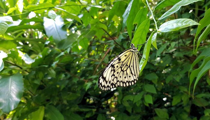 Schmetterling im Botanischen Garten Leipzig